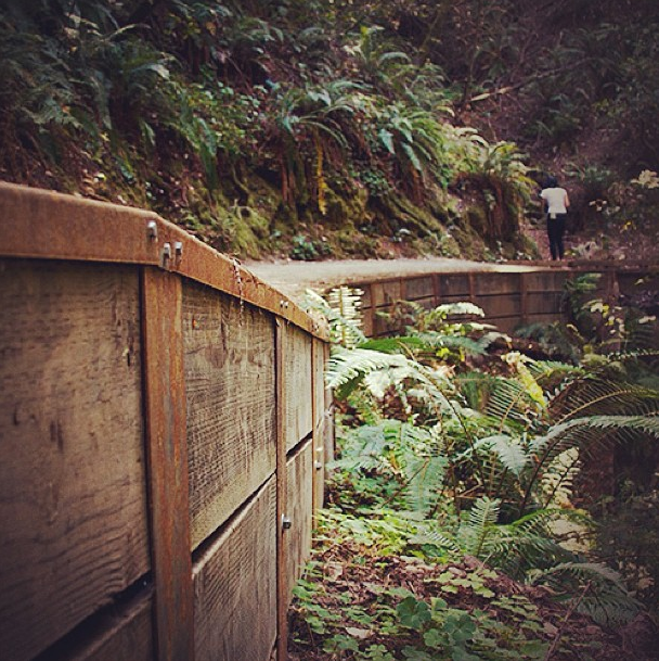 Stay On The Trail – Muir Woods State Park, CA