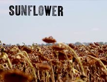Sunflower Video Poem